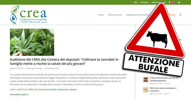 gianpaolo-grassi-crea-bufala-per-monopolio-cannabis-legale